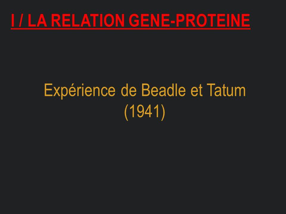 I / LA RELATION GENE-PROTEINE Expérience de Beadle et Tatum (1941)