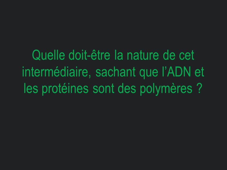 Quelle doit-être la nature de cet intermédiaire, sachant que l'ADN et les protéines sont des polymères ?