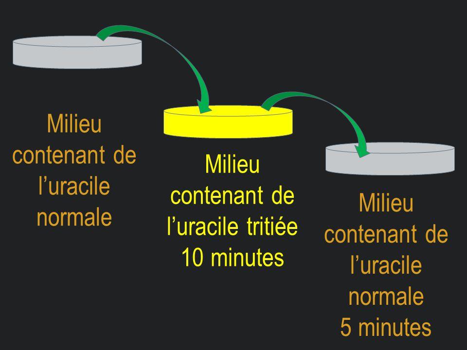 Milieu contenant de l'uracile normale Milieu contenant de l'uracile tritiée 10 minutes Milieu contenant de l'uracile normale 5 minutes