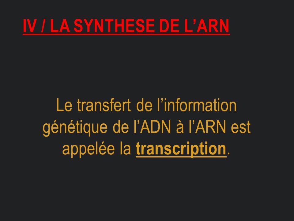 IV / LA SYNTHESE DE L'ARN Le transfert de l'information génétique de l'ADN à l'ARN est appelée la transcription.