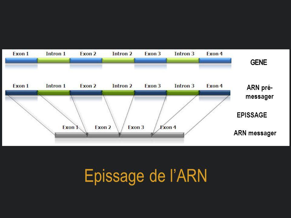 Epissage de l'ARN ARN pré- messager ARN messager EPISSAGE