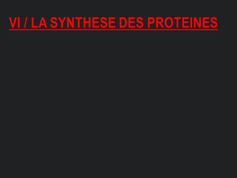 VI / LA SYNTHESE DES PROTEINES