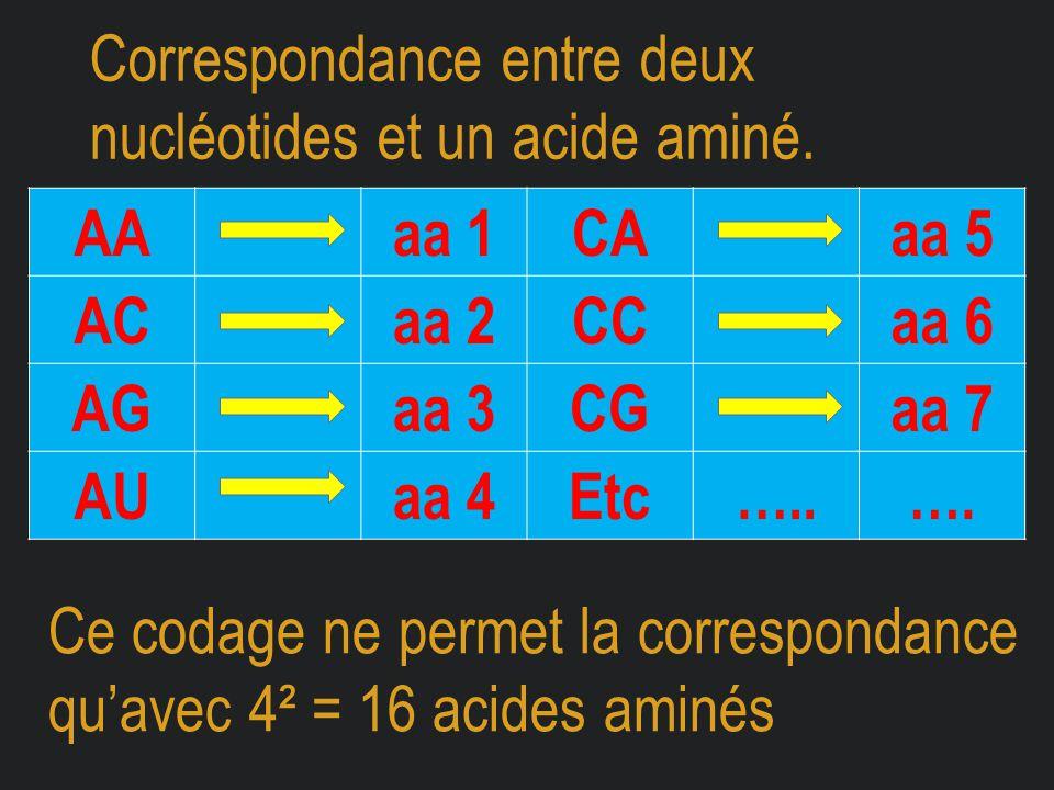 Correspondance entre deux nucléotides et un acide aminé. AAaa 1CAaa 5 ACaa 2CCaa 6 AGaa 3CGaa 7 AUaa 4Etc…..…. Ce codage ne permet la correspondance q