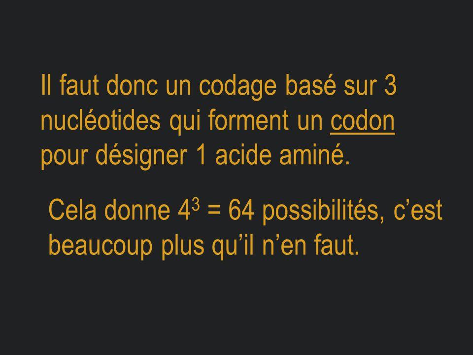 Il faut donc un codage basé sur 3 nucléotides qui forment un codon pour désigner 1 acide aminé. Cela donne 4 3 = 64 possibilités, c'est beaucoup plus