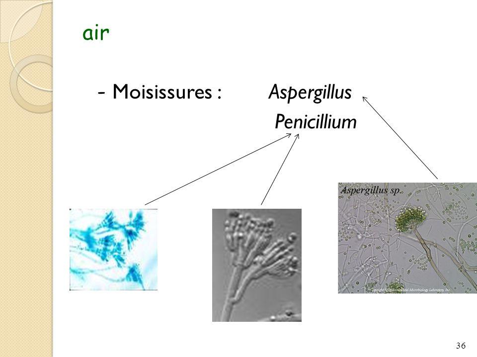 air - Moisissures : Aspergillus Penicillium 36
