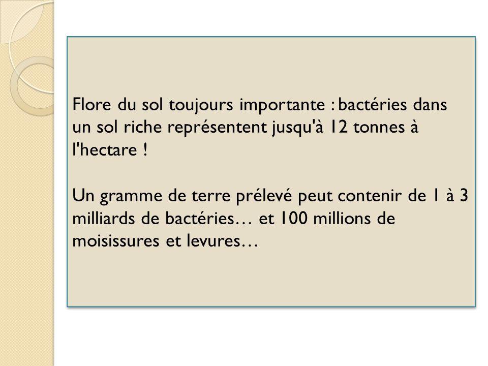 Flore du sol toujours importante : bactéries dans un sol riche représentent jusqu à 12 tonnes à l hectare .