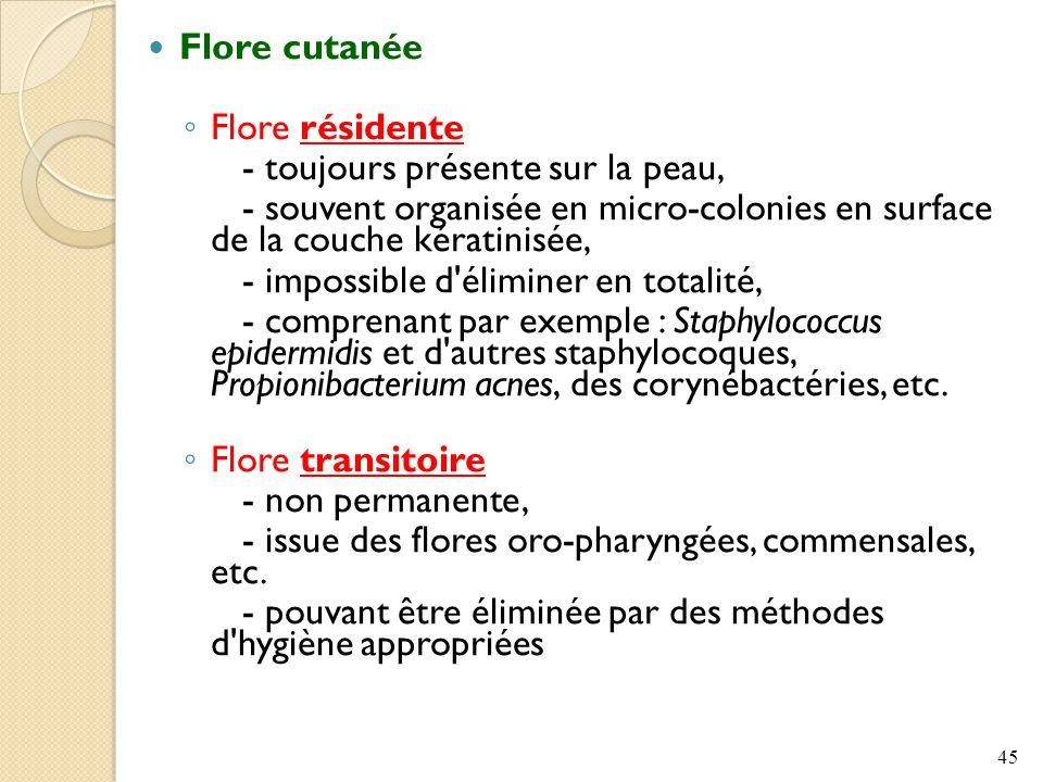Flore cutanée ◦ Flore résidente - toujours présente sur la peau, - souvent organisée en micro-colonies en surface de la couche kératinisée, - impossible d éliminer en totalité, - comprenant par exemple : Staphylococcus epidermidis et d autres staphylocoques, Propionibacterium acnes, des corynébactéries, etc.