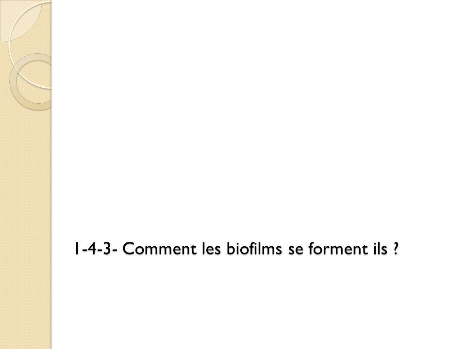 1-4-3- Comment les biofilms se forment ils ?