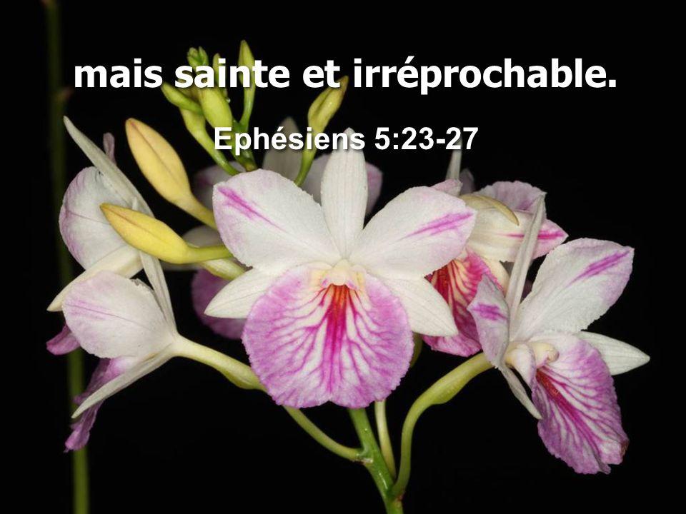 mais sainte et irréprochable. Ephésiens 5:23-27 mais sainte et irréprochable. Ephésiens 5:23-27
