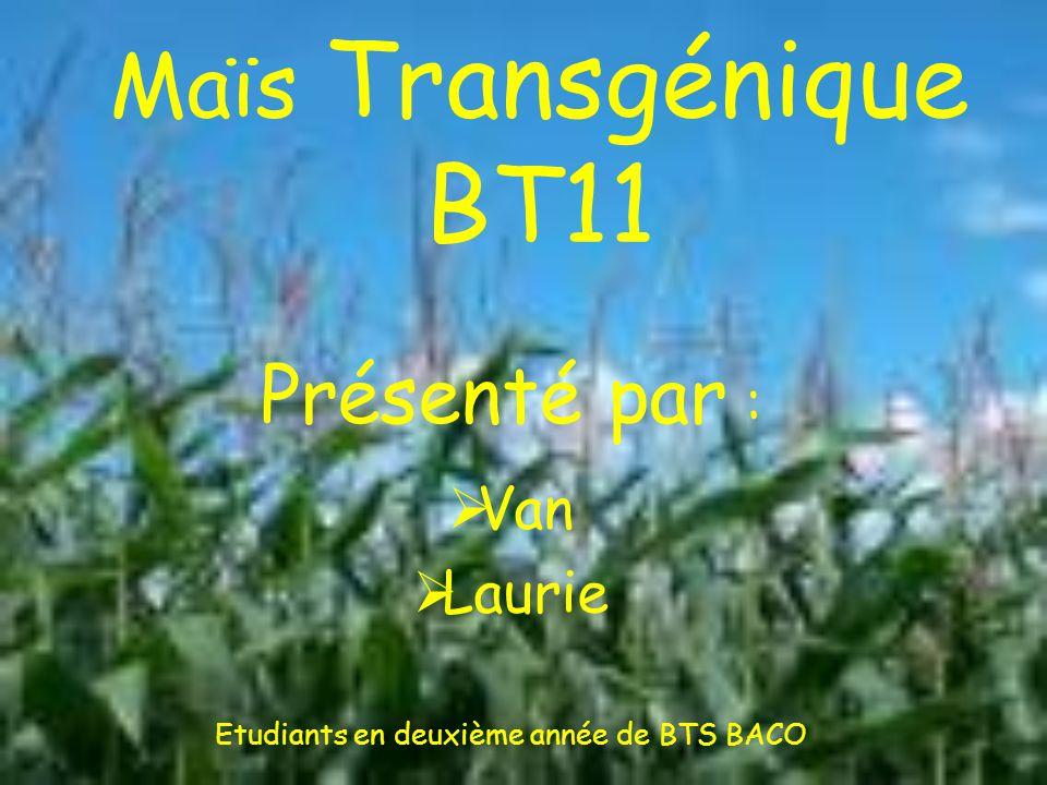 Maïs Transgénique BT11 Présenté par :  Van  Laurie Etudiants en deuxième année de BTS BACO