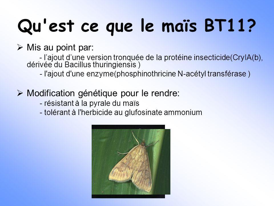Qu'est ce que le maïs BT11?  Mis au point par: - l'ajout d'une version tronquée de la protéine insecticide(CryIA(b), dérivée du Bacillus thuringiensi