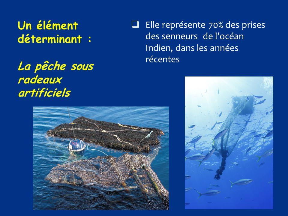 Un élément déterminant : La pêche sous radeaux artificiels  Elle représente 70% des prises des senneurs de l'océan Indien, dans les années récentes