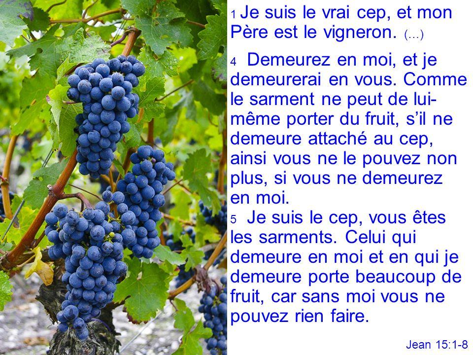 1 Je suis le vrai cep, et mon Père est le vigneron. (…) 4 Demeurez en moi, et je demeurerai en vous. Comme le sarment ne peut de lui- même porter du f