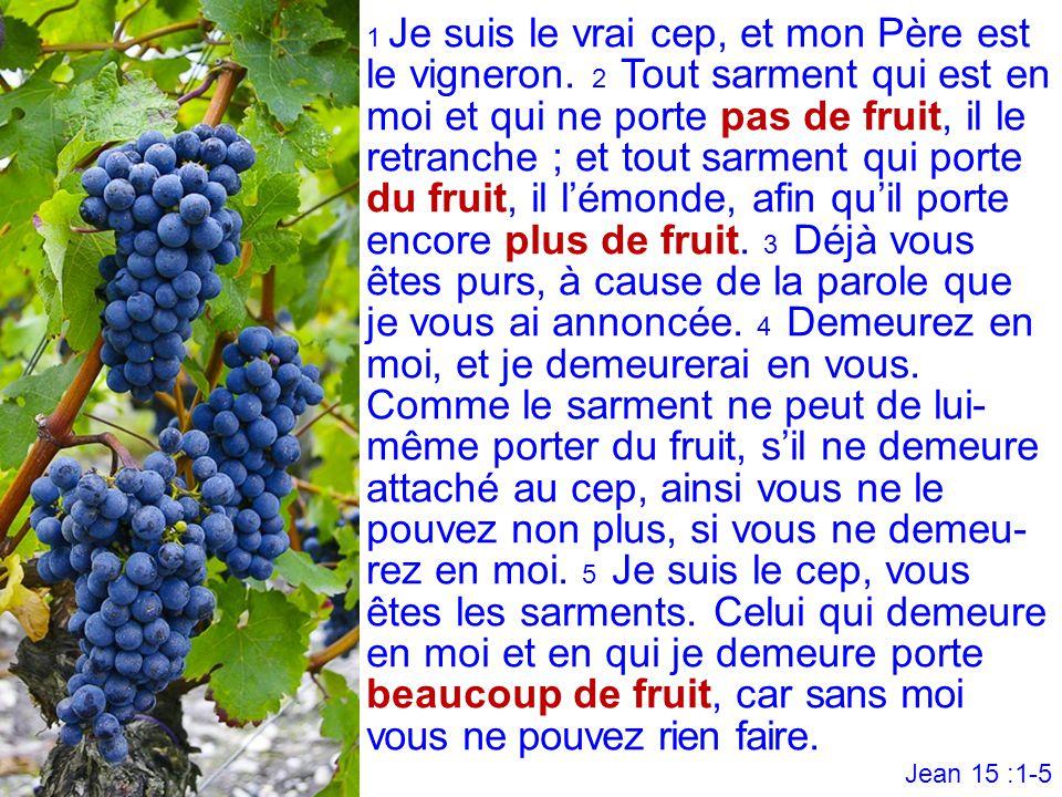 1 Je suis le vrai cep, et mon Père est le vigneron. 2 Tout sarment qui est en moi et qui ne porte pas de fruit, il le retranche ; et tout sarment qui