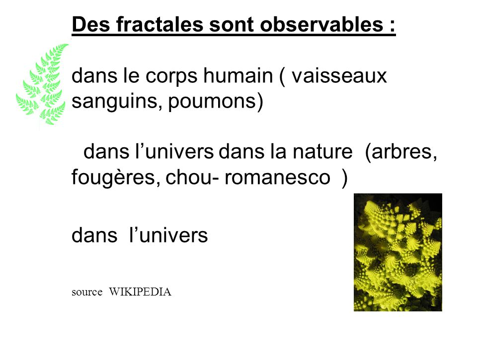 Des fractales sont observables : dans le corps humain ( vaisseaux sanguins, poumons) dans l'univers dans la nature (arbres, fougères, chou- romanesco