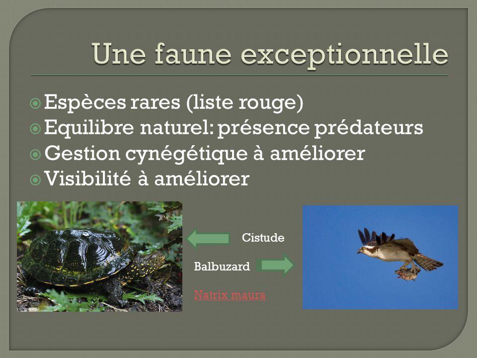  Espèces rares (liste rouge)  Equilibre naturel: présence prédateurs  Gestion cynégétique à améliorer  Visibilité à améliorer Cistude Balbuzard Natrix maura