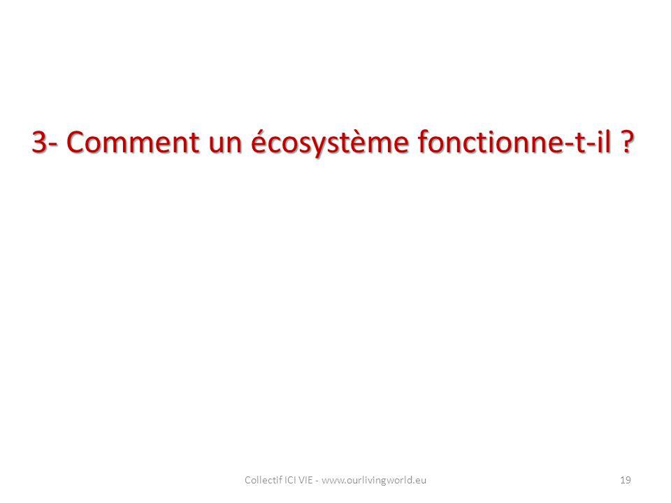 3- Comment un écosystème fonctionne-t-il ? Collectif ICI VIE - www.ourlivingworld.eu19