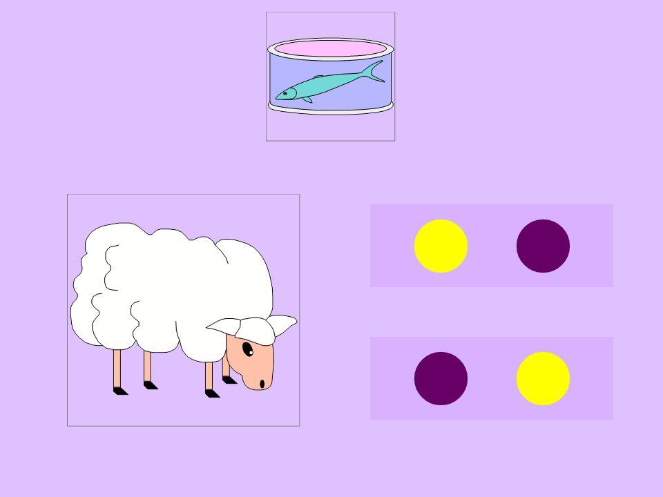 ton-mouton