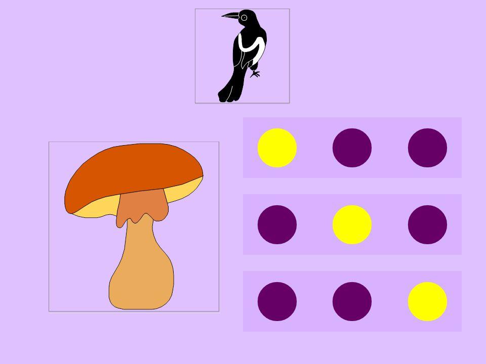 pi-champignon