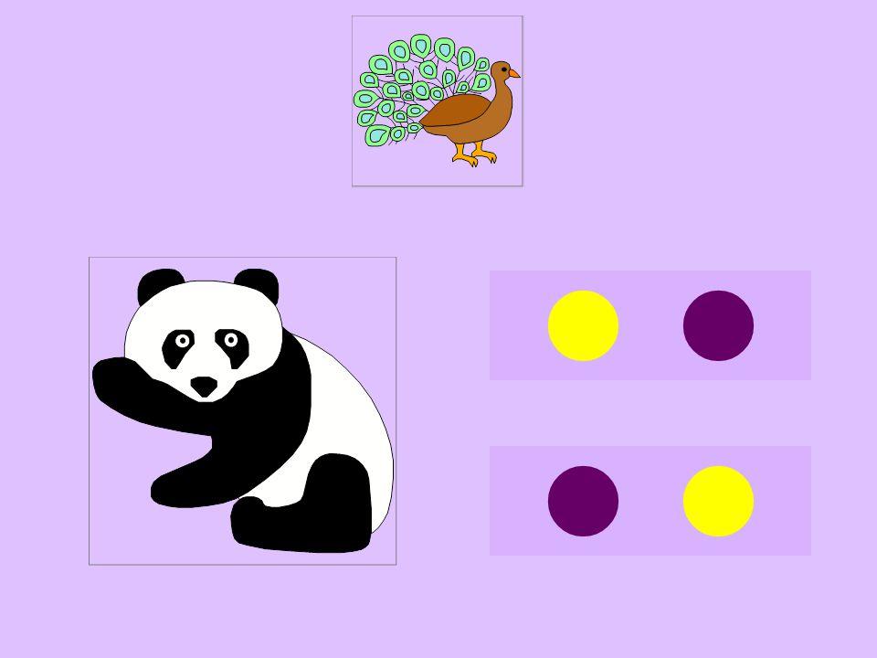 pan-panda