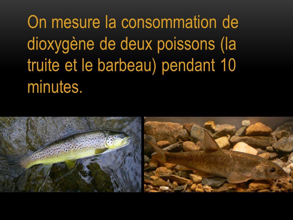 On mesure la consommation de dioxygène de deux poissons (la truite et le barbeau) pendant 10 minutes.