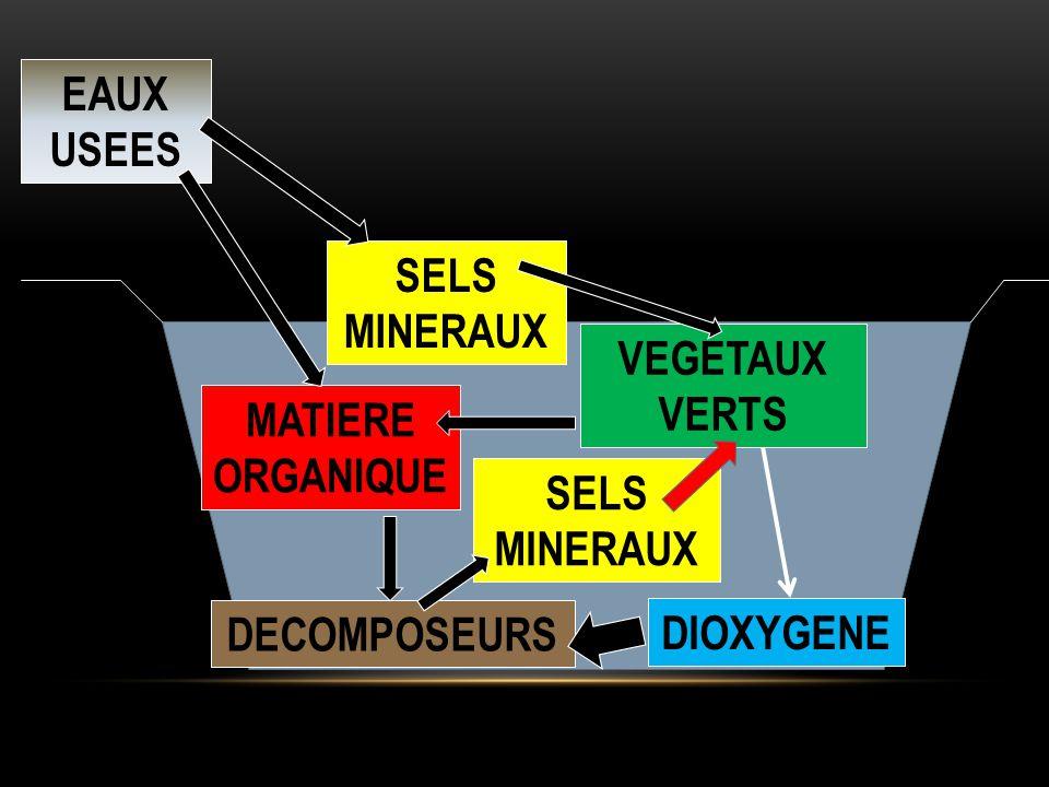 EAUX USEES MATIERE ORGANIQUE SELS MINERAUX VEGETAUX VERTS DECOMPOSEURS SELS MINERAUX DIOXYGENE