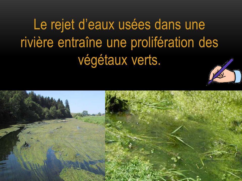 Le rejet d'eaux usées dans une rivière entraîne une prolifération des végétaux verts.
