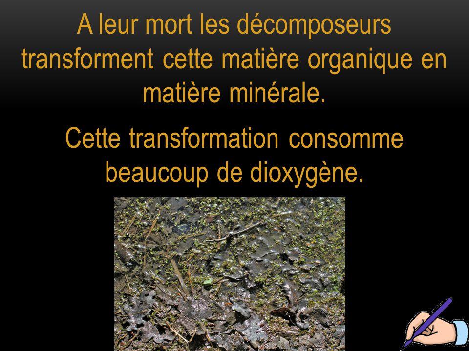 A leur mort les décomposeurs transforment cette matière organique en matière minérale.