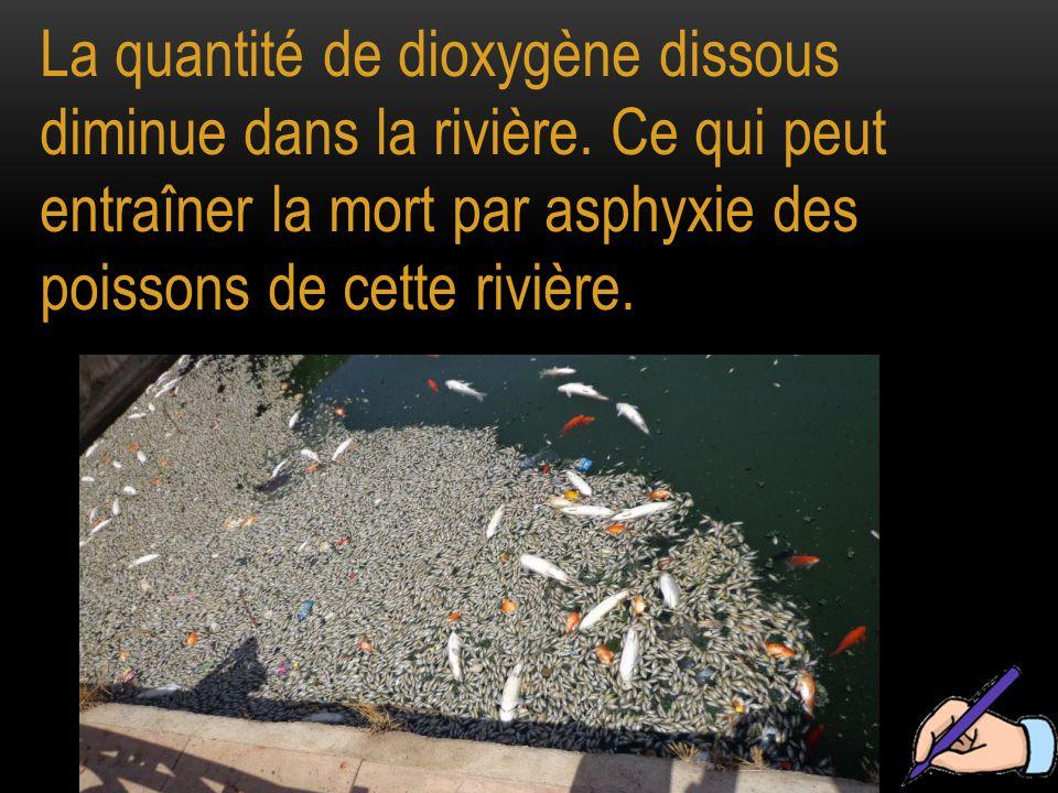 La quantité de dioxygène dissous diminue dans la rivière.