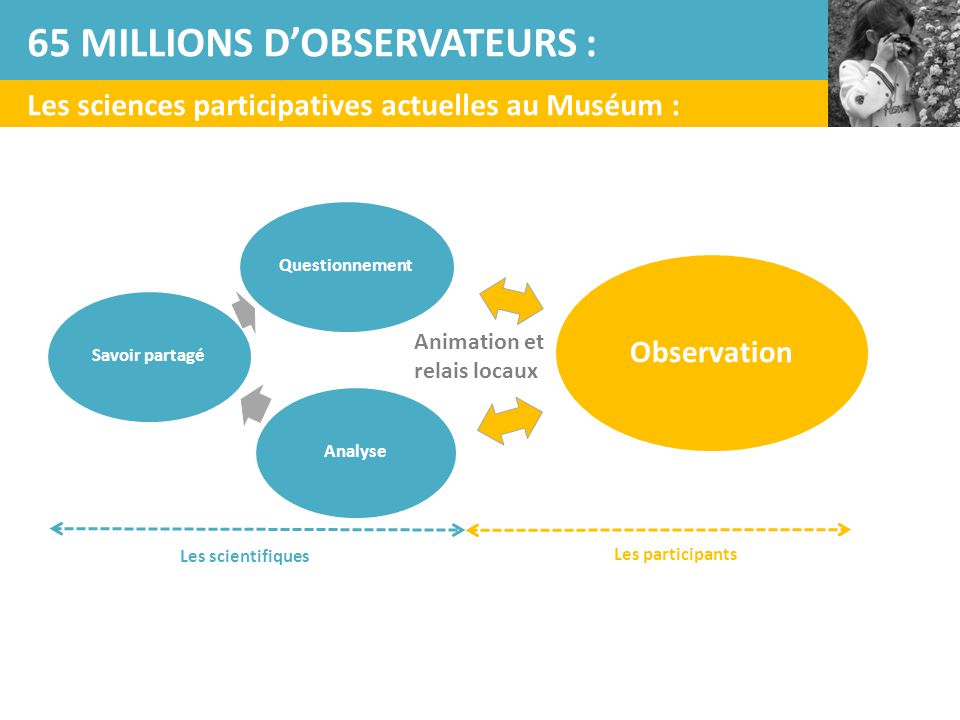 Questionnement Observation AnalyseSavoir partagé Les scientifiques Les participants Les sciences participatives actuelles au Muséum : 65 MILLIONS D'OB