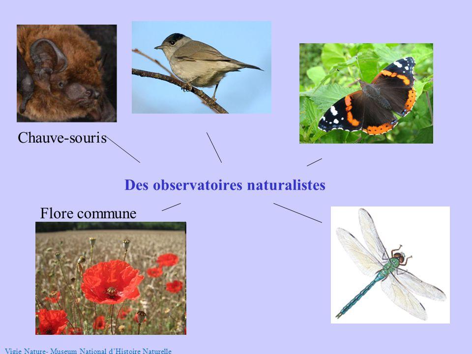 Chauve-souris Flore commune Vigie Nature- Museum National d'Histoire Naturelle Des observatoires naturalistes