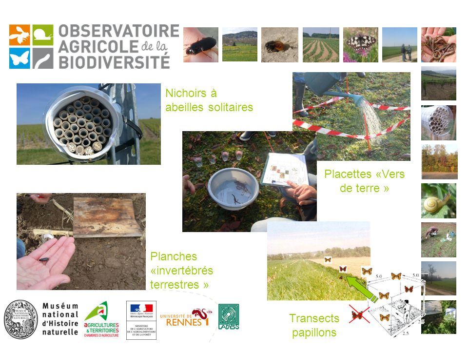 Planches «invertébrés terrestres » Nichoirs à abeilles solitaires Transects papillons Placettes «Vers de terre »