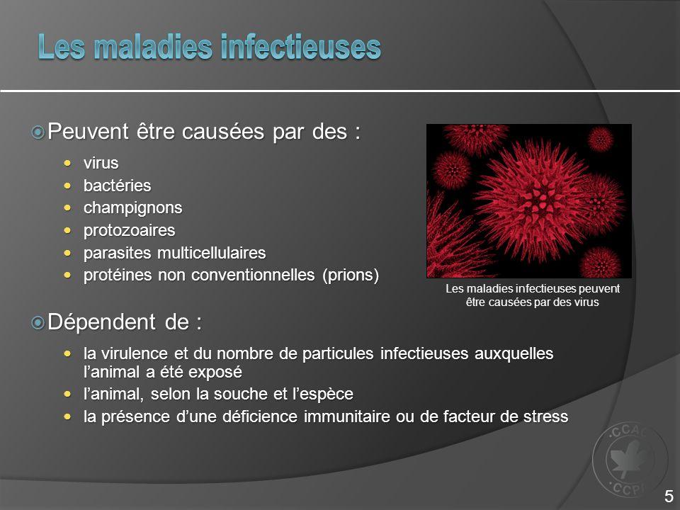  Peuvent être causées par des : virus virus bactéries bactéries champignons champignons protozoaires protozoaires parasites multicellulaires parasites multicellulaires protéines non conventionnelles (prions) protéines non conventionnelles (prions)  Dépendent de : la virulence et du nombre de particules infectieuses auxquelles l'animal a été exposé la virulence et du nombre de particules infectieuses auxquelles l'animal a été exposé l'animal, selon la souche et l'espèce l'animal, selon la souche et l'espèce la présence d'une déficience immunitaire ou de facteur de stress la présence d'une déficience immunitaire ou de facteur de stress Les maladies infectieuses peuvent être causées par des virus 5