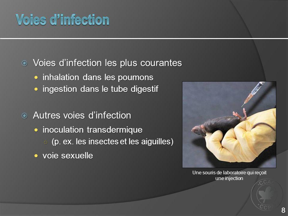  Voies d'infection les plus courantes inhalation dans les poumons inhalation dans les poumons ingestion dans le tube digestif ingestion dans le tube