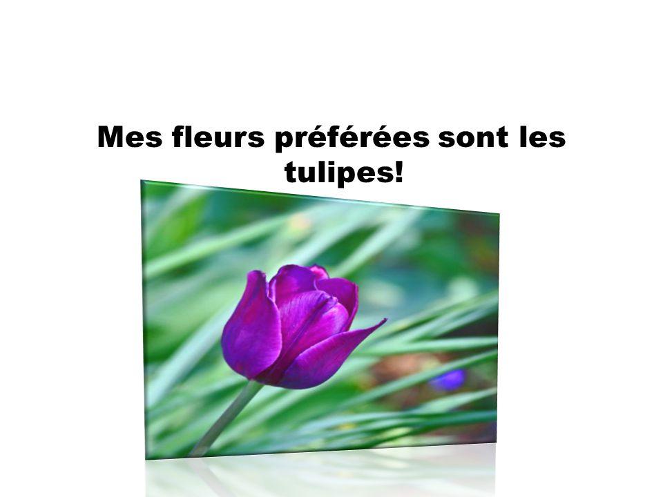 Mes fleurs préférées sont les tulipes!