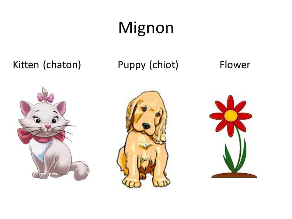 Mignon Kitten (chaton) Puppy (chiot)Flower