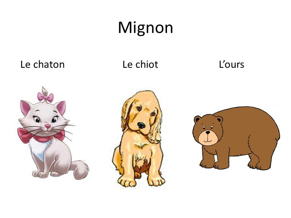 Mignon Le chaton Le chiotL'ours
