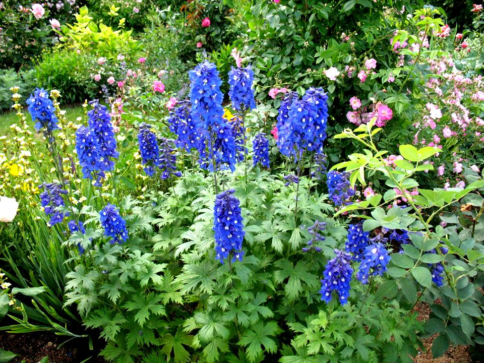 Soir au jardin (sonnet) Je ne suis qu'un poète au fond de son jardin. En cette fin de jour, le ciel s'emparadise De sillages légers brodés de mignardi