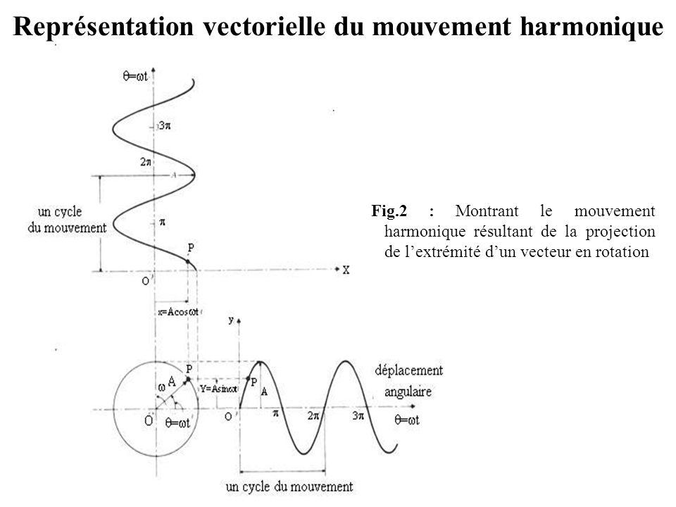 Représentation vectorielle du mouvement harmonique Fig.2 : Montrant le mouvement harmonique résultant de la projection de l'extrémité d'un vecteur en