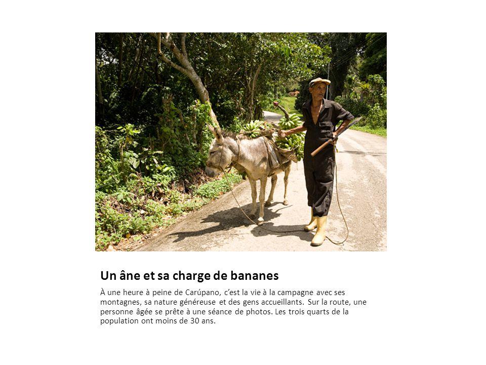 Un âne et sa charge de bananes À une heure à peine de Carúpano, c'est la vie à la campagne avec ses montagnes, sa nature généreuse et des gens accueillants.