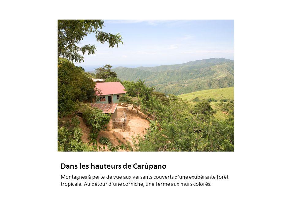 Dans les hauteurs de Carúpano Montagnes à perte de vue aux versants couverts d'une exubérante forêt tropicale.