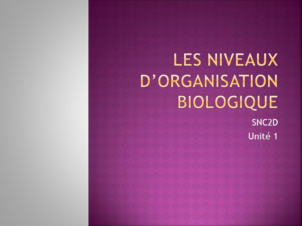 1.Je décris l'organisation hiérarchique des animaux et des végétaux.