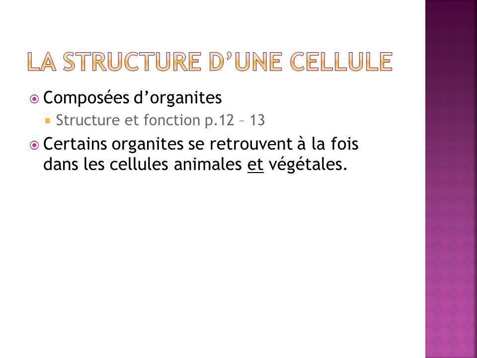  Composées d'organites  Structure et fonction p.12 – 13  Certains organites se retrouvent à la fois dans les cellules animales et végétales.