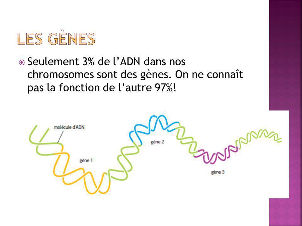  Seulement 3% de l'ADN dans nos chromosomes sont des gènes. On ne connaît pas la fonction de l'autre 97%!