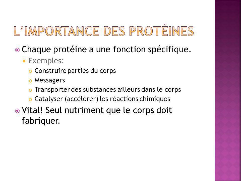  Chaque protéine a une fonction spécifique.  Exemples: Construire parties du corps Messagers Transporter des substances ailleurs dans le corps Catal
