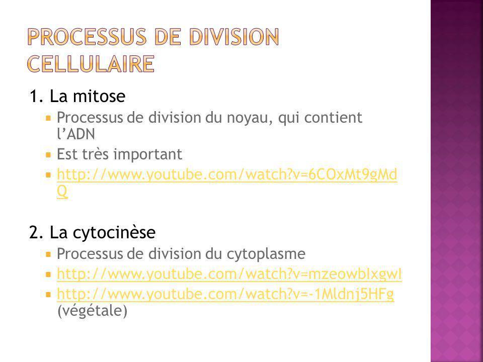 1. La mitose  Processus de division du noyau, qui contient l'ADN  Est très important  http://www.youtube.com/watch?v=6COxMt9gMd Q http://www.youtub