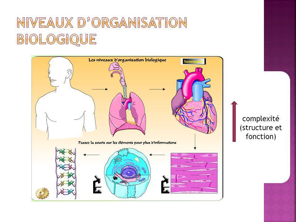 complexité (structure et fonction)