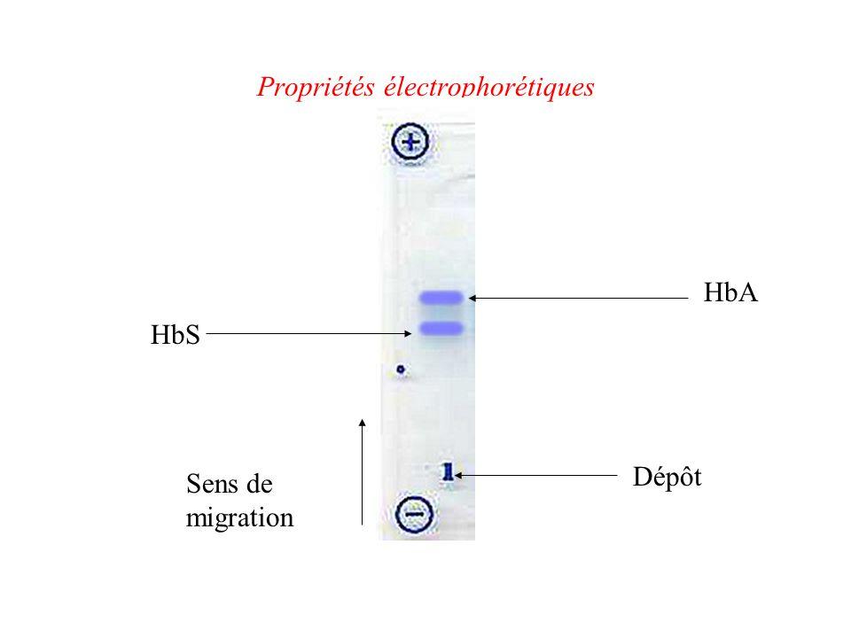 Propriétés électrophorétiques HbS HbA Sens de migration Dépôt