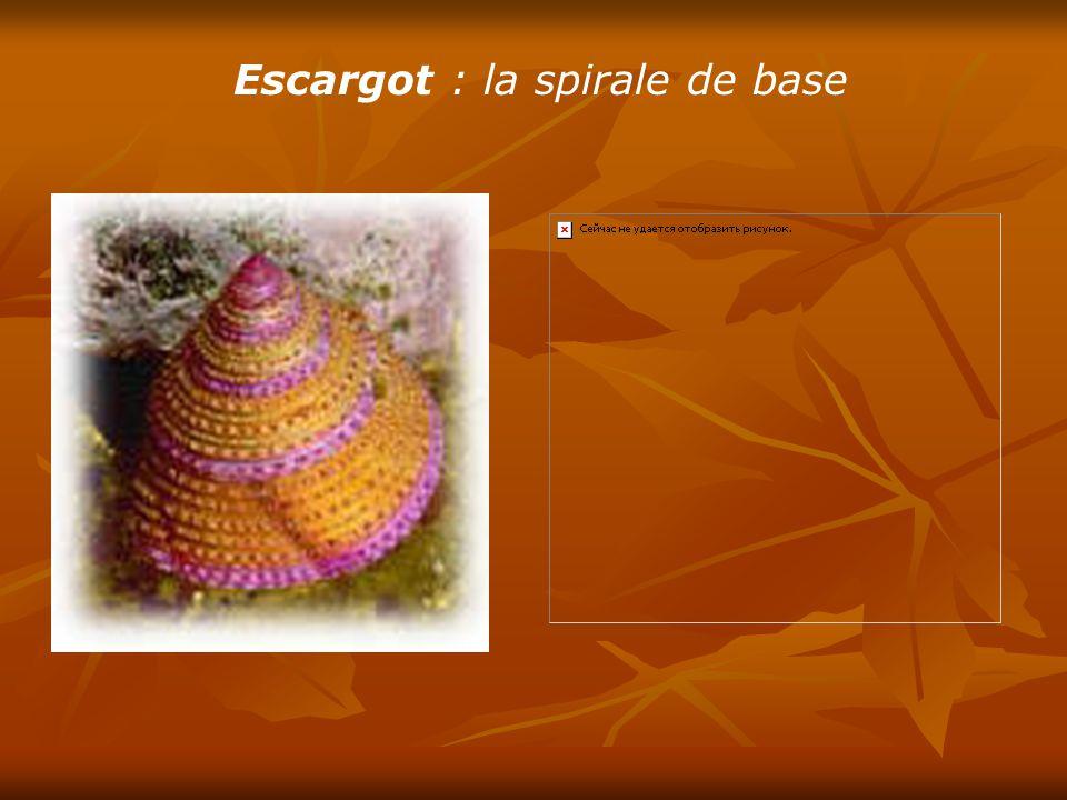 Ananas :13 spirales à droite et 8 spirales à gauche