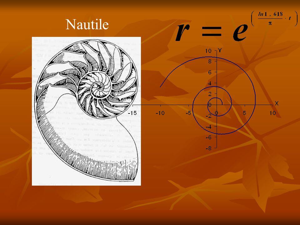 Cette spirale se rencontre beaucoup dans la nature